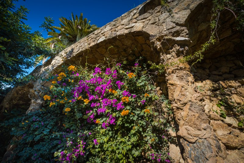 flowers park guell