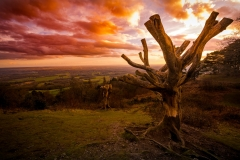 Leith Hill sunset