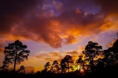 sunset surrey
