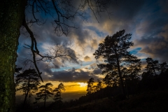 sunset upon leith hill